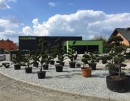 bonsai-ogrodowe-Gliwice-Rybnik_Wilcza-01