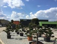 bonsai-ogrodowe-Gliwice-Rybnik_Wilcza-03